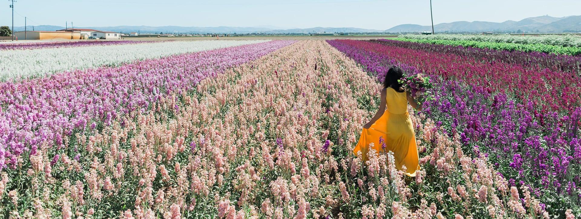 Woman walking away in field of stock.