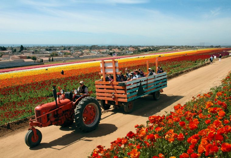 Tractor ride at the Flower Fields.