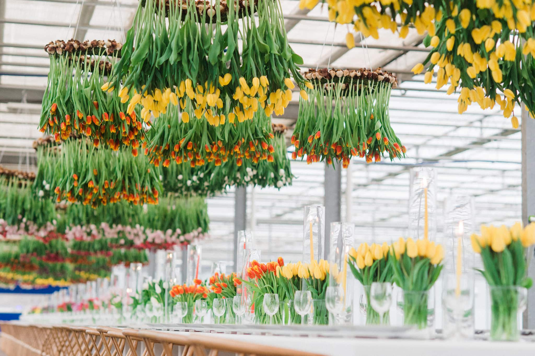 Dinner table in greenhouse with tulip chandeliers.