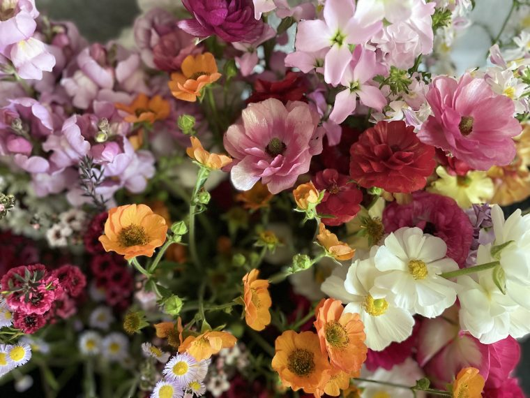 Close up of a bunch of flowers.