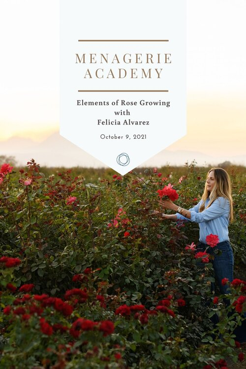 Elements of rose growing