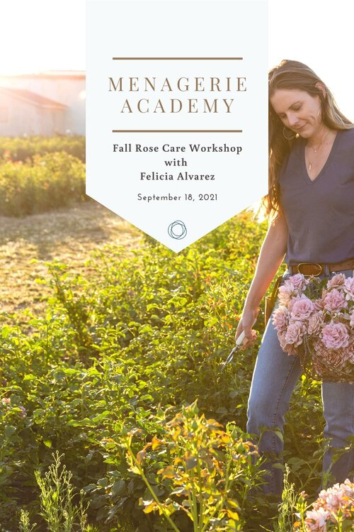 Rose Care Workshop