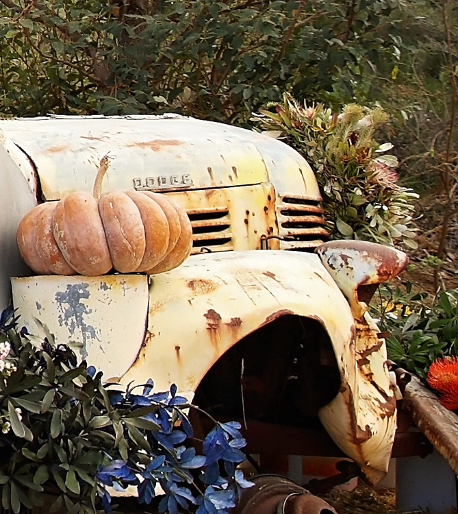 Old Truck with pumpkin and fall flowers